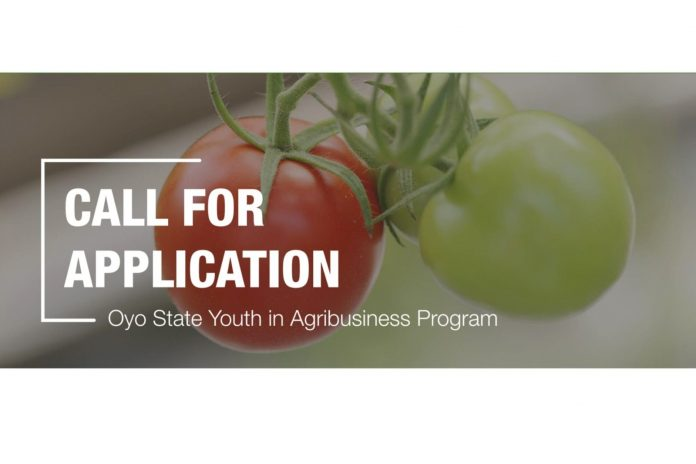 OYO STATE YOUTH IN AGRIBUSINESS TOMATOES (OYSADA) PROGRAM 2020 APPLICATION