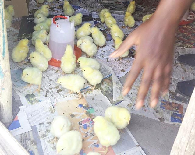 Poultry Farm Training And Production